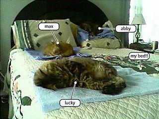 CatsOnBed